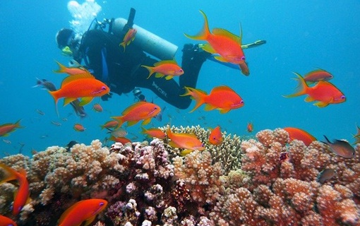 Prvi put posle 120 godina: Nađen ogromni koralni greben