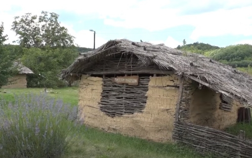 Pločnik kod Prokuplja: Pronađeni skeletni ostaci psa stari najmanje 6.500 godina